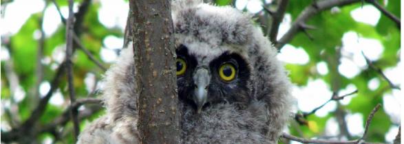2013-owl-live-cam