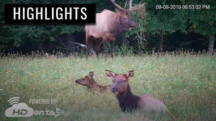 2019 PA Elk Season Highlights