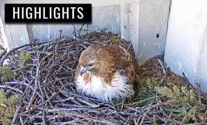 Syracuse University Hawks Highlights 2019 Nest Season