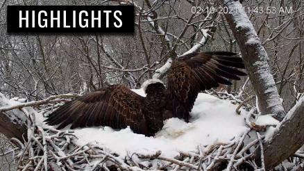 Hanover Eagles Swat Away Nutterbutter