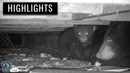 Bears Take a Fieldtrip Out of Den 2021 | HDOnTap.com
