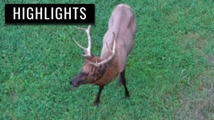 Elk and Deer in PA Elk Field 2021