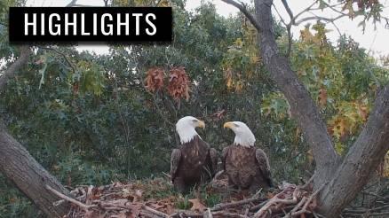 Hanover Eagles Return to Nest