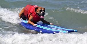 dog beach cam
