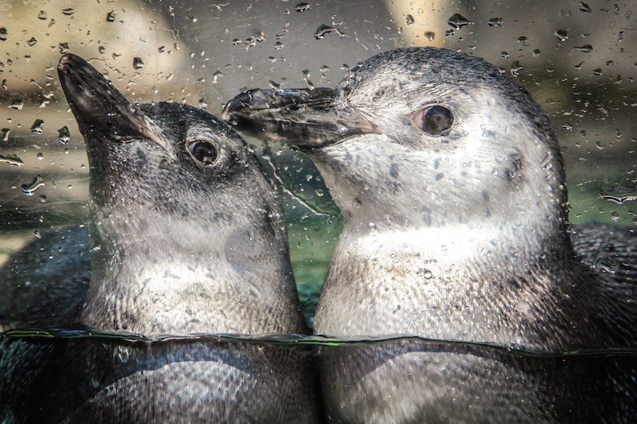 Penguin Habitat Cam Live Cams Hdontap
