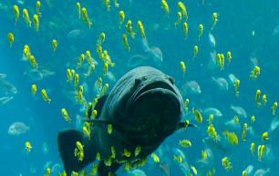 Protect fish and wild life