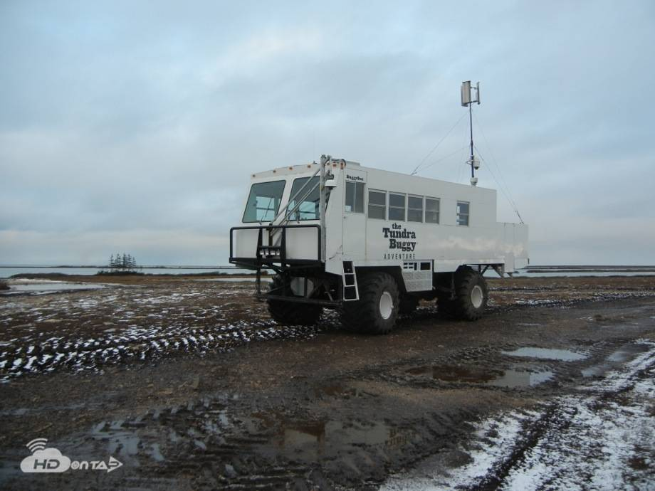 Churchill Manitoba Canada Live Polar Bear Camera Network