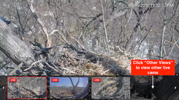 Live Streaming Bald Eagle Nest Webcam in Hanover, PA